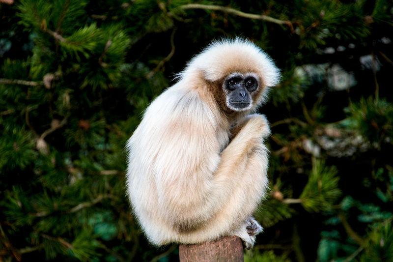 Animal Animal Photography Animal Themes Animal Wildlife Animal_collection Animals Day Mammal Monkey Monkeys No People One Animal Outdoors