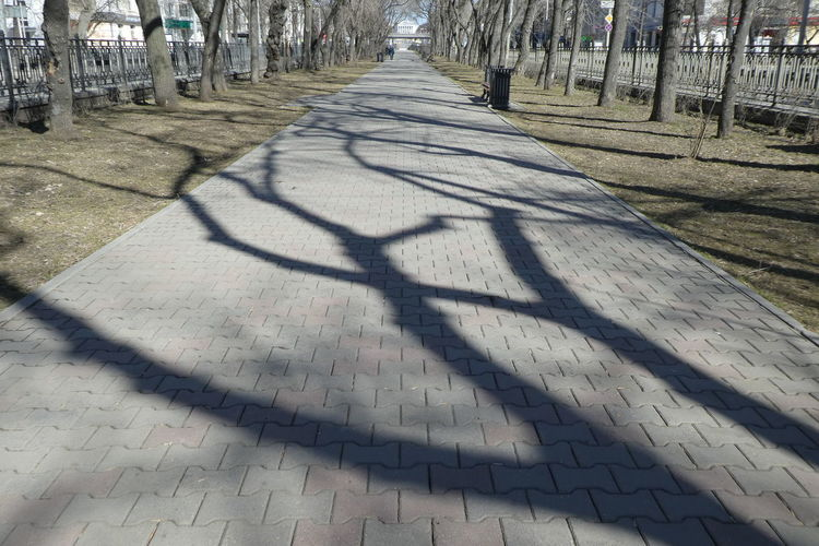 Tree Shadow Sunlight The Way Forward Direction Nature Footpath Day Plant Architecture Diminishing Perspective Outdoors Street City Paving Stone Treelined Purist No Edit No Filter No Edit/no Filter Shadows