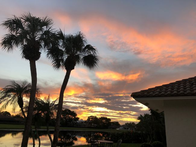 Home Palm Tree Reflection Sunset_collection Vacations Beauty In Nature Change Cloud - Sky Island Nature No People Outdoors Relax Scenics Sky Sunset Tree