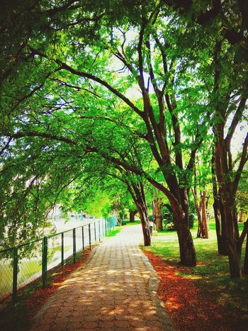 The Way Forward Outdoors Green Color No People Nature Beauty In Nature Grass Day Tree