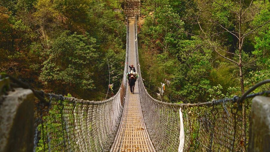 Discovering Forward Hiking Nepal Power Travel Architecture Bridge Built Structure Connection Diminishing Perspective Direction Explore Footbridge Forest Frame Go Higher Green Color Hike Nature Outdoors Rope Bridge Strenght Vegetation Way