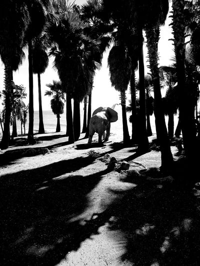 SPAIN Seaside_collection Nature_collection Road Nature In The City Seaside Path San Pedro De Atacama Elephant Elephant Ob The Sea Blackandwhite Palms Palmtrees Sand