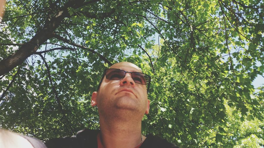 Low Angle View Of Man Wearing Sunglasses Against Trees