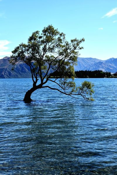 That Wanaka Tree Tree Water Mountain Lake Blue Reflection Bird Rippled Sky Mountain Range Tranquil Scene Scenics Coast Shore Horizon Over Water Tranquility Calm Remote Lakeshore