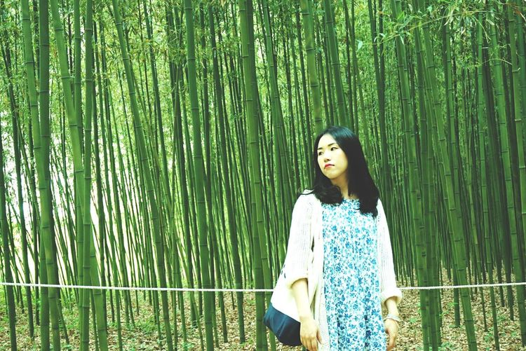 Bamboo Forest Green Traveling That's Me EyeEm Nature Lover EyeEm Korea
