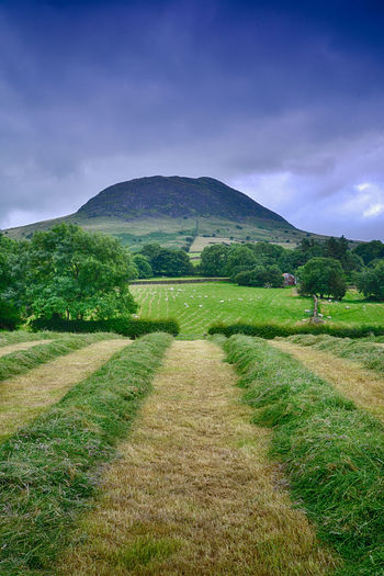 Northern Ireland Beauty In Nature Cloud - Sky Day Farming Field Grass Landscape Mountain Nature No People Outdoors Rural Scene Scenics Silage Sky Slemish Summer The Way Forward Tranquil Scene Tranquility Tree