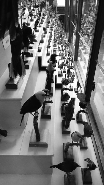 Society, you crazy breed... High Angle View Black And White Ornithology  Museum Of Natural History Repetition