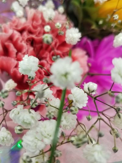 😁 Babysbreath Beauty In Nature EyeEm Nature Lover Flower Head Flower Close-up Plant In Bloom Blooming