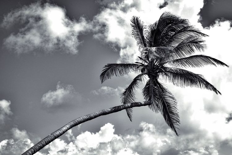 Sky Palm Tree Low Angle View Cloud - Sky Tree Nature No People Outdoors Beauty In Nature Blackandwhite Black And White Black And White Photography Blackandwhite Photography Eyemphotography Eyeemphotography EyeEm Best Shots - Black + White The Week Of Eyeem EyeEmNewHere Anguilla Black & White Tranquility