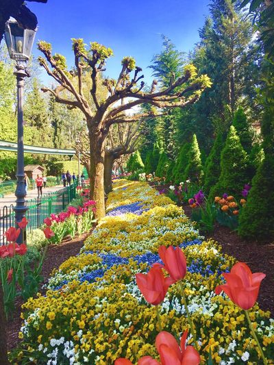 Flower Nature Tree Day Outdoors Beauty In Nature Europapark Rust No People Springtime