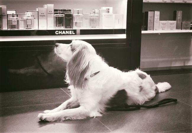 Domestic Animals Pets Mammal Dog One Animal Animal Themes Indoors  Day No People 愛アムステルダム 犬 素晴らしい 共存