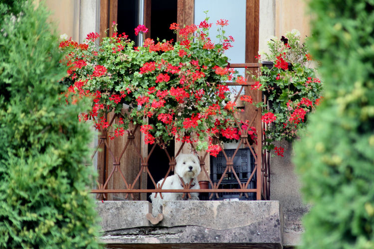 Dog - terrace