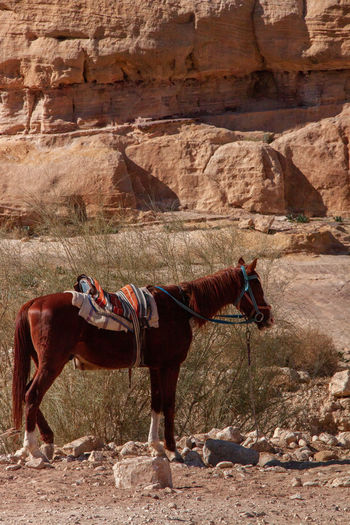 Side view of horse standing on rock