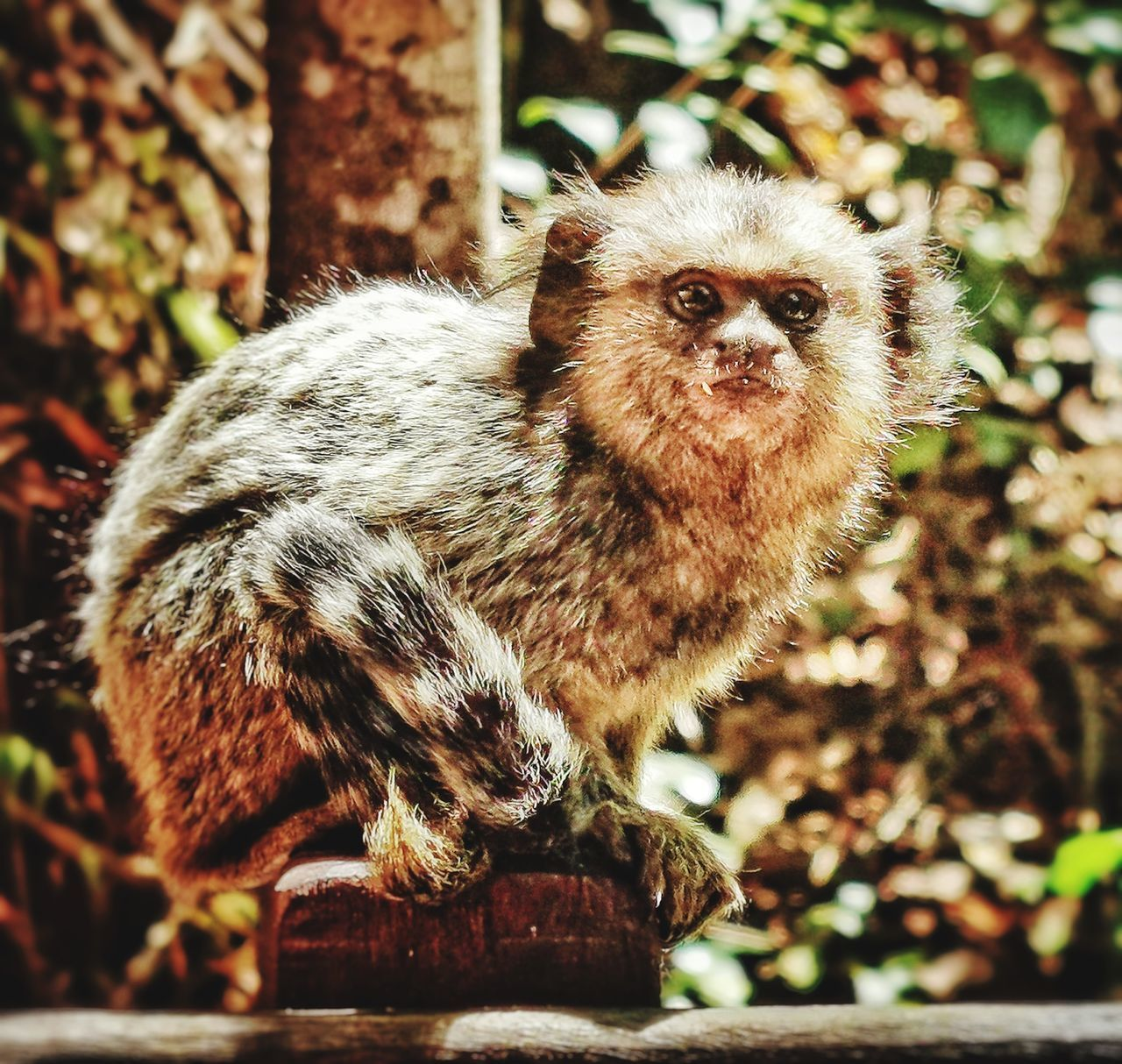 one animal, mammal, focus on foreground, animals in the wild, animal wildlife, portrait, vertebrate, looking at camera, no people, day, primate, close-up, nature, looking, outdoors, tree