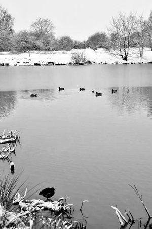 Monochrome Blackandwhite Keep Warm In Winter Walking Around Cold Winter ❄⛄ Pond Life Snow ❄ Water Lake Bird Outdoors Day Large Group Of Animals Animals In The Wild Animal Themes No People Nature Tree Sky