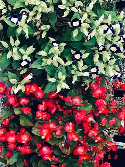 Red Plant Growth Plant Part Full Frame Beauty In Nature Freshness Leaf No People Nature Day Flower Backgrounds High Angle View Outdoors Green Color
