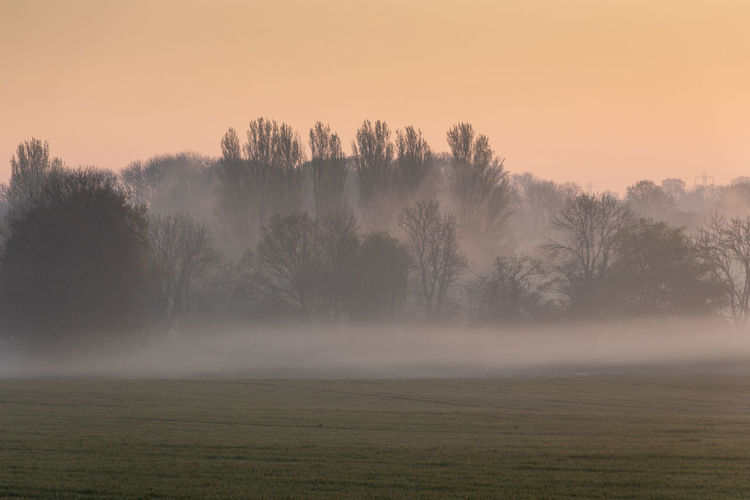 Misty spring morning in rural Cambridgeshire countryside Tree Beauty In Nature Plant Tranquil Scene Tranquility Fog Sky Scenics - Nature Environment Landscape No People Hazy  Non-urban Scene Land Sunset Field Idyllic Nature Rural Scene Outdoors Cambridgeshire England Uk