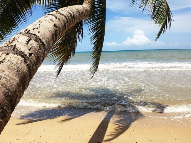 Check This Out Beach Photography Hello World Relaxing Enjoying Life Water Sand Palm Trees Follow Me On EyeEm Eyeem Puerto Rico My Island PUERTO RICO