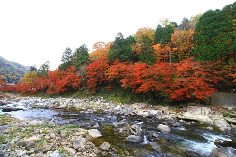 紅葉 Nature Enjoying Life Canon 70d Canon EOS 70D 写真好きな人と繋がりたい Beauty In Nature 写真撮ってる人と繋がりたい EyeEm Best Shots EyeEm Gallery ファインダー越しの私の世界 紅葉2016 Tree Autumn