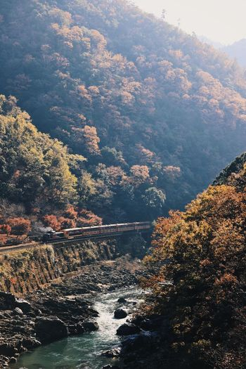 Autumn colors Autumn Beauty In Nature Change Day Environment Flowing Flowing Water Forest High Angle View Land Mountain Nature No People Non-urban Scene Outdoors Plant Railway Railway Track River Scenics - Nature Tranquil Scene Tranquility Tree Water The Great Outdoors - 2018 EyeEm Awards