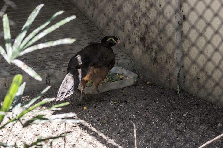 Animal Behavior Animal Themes Animals In The Wild Beak Bird Day Focus On Foreground No People One Animal Outdoors Wildlife Zoology