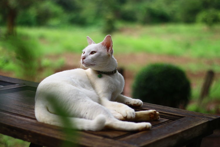 Close-up of a cat sitting on wood