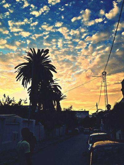 Landscape Palms Clouds Sunset
