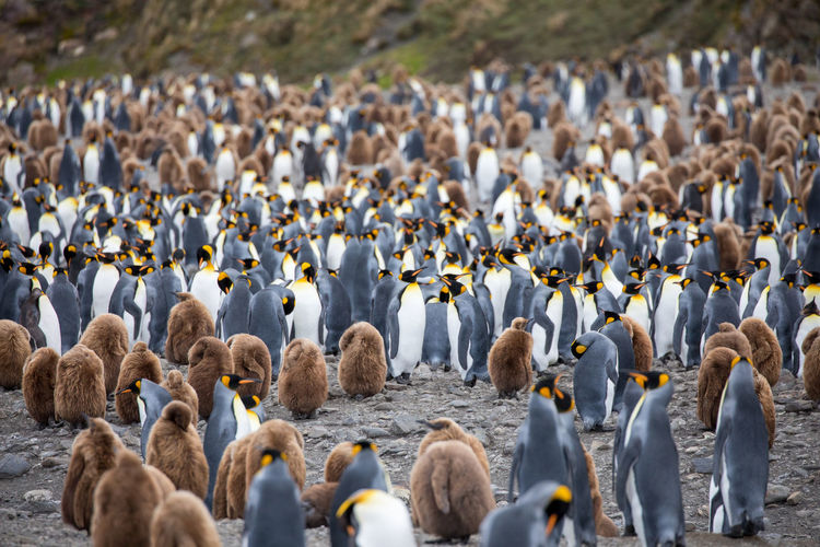 Penguins At Beach