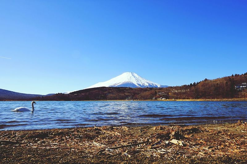 富士山と白鳥 Mt.Fuji and Swan . Swan Lake Mountain View Landscape Landscape_Collection The Great Outdoors - 2015 EyeEm Awards EyeEm Best Shots - Landscape Nature EyeEm Nature Lover