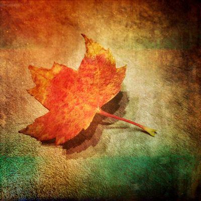 Mextures Mexturesapp Fall Fall Colors Fall Beauty