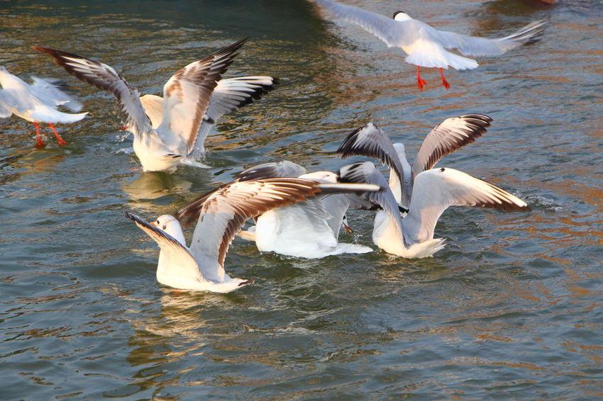 Ganga Ghat Gangamstyle Ganga Ganga River Gangaarti Gangariver Seagull Seagulls And Sea