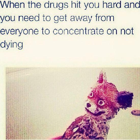 LMAO Drugs Molly Headass