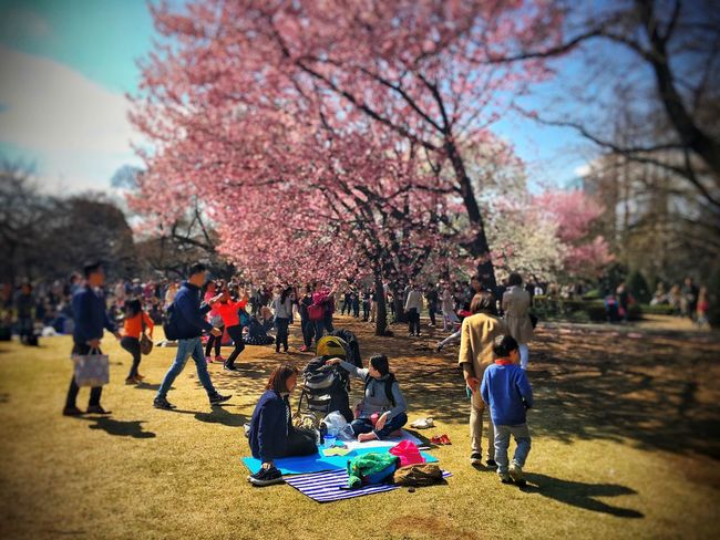 EyeEm Tokyo MeetUp 12 People Watching People Peoplephotography People Photography Urban Spring Fever Sakura2016 Sakura Cherry Blossoms Cherry Blossom Flower Flower Collection Flower Porn Flowerporn Flowers Wood