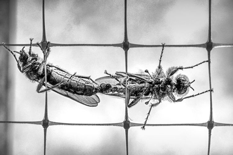 Close-up of insect on window
