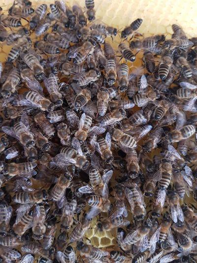 Bienen Bienen  Biene 🐝 Bienenwabe Bienenzucht Bienen🐝 Bee Bee 🐝