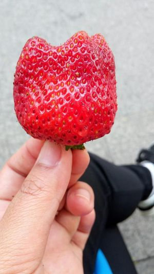 Show big strawberry Big Stewberry Close-up Food Food And Drink Freshness Fruit Healthy Eating Human Body Part Human Finger Human Hand Lifestyles One Man Only One Person Outdoors Personal Perspective Red Red Strawberries Show Strawberries Strawberry Sweet Food