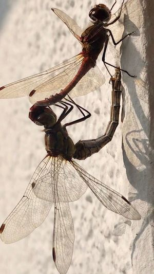 Insect Animals In The Wild Animal Wildlife Invertebrate Nature Dragonfly Animal Themes