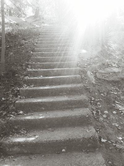 Libertad Escalera Motivacion