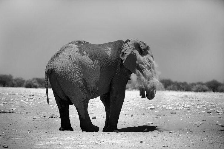 Elephant standing at etosha national park against sky on sunny day