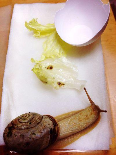 Snail🐌 Snails Snail Snail ❤ Snail カタツムリ