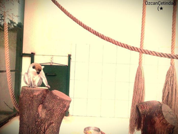 Bursa Halka Açık parkta Kafes İçindeki Maymun First Eyeem Photo