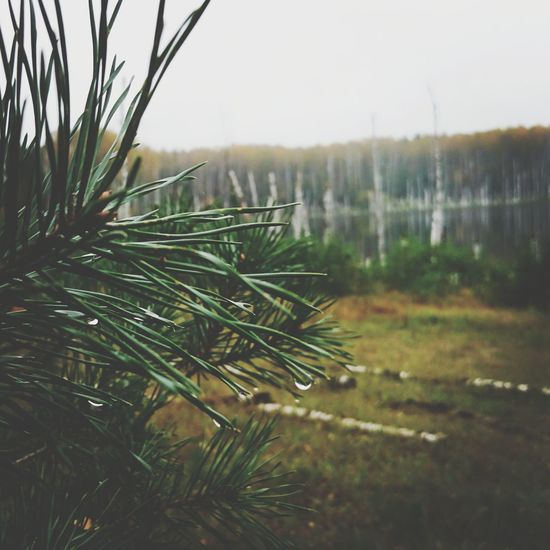 Nature Growth Tree No People Close-up Outdoors Plant Day Sky Beauty In Nature Scenics Winter Needle - Plant Part Branch