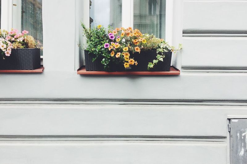 Close-up of window box