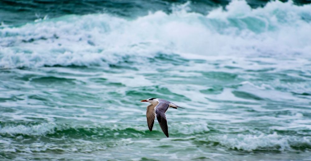 Water Animals In The Wild Sea Animal Animal Wildlife Vertebrate One Animal Bird Wave Beauty In Nature Outdoors Motion