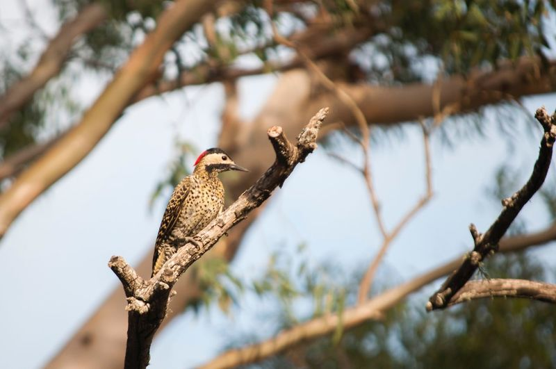 Bird Animals In The Wild Perching Animal Themes Animal Wildlife Branch Tree Nature Low Angle View No People One Animal Day Woodpecker Outdoors