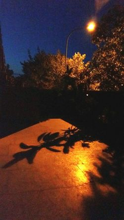 Night Illuminated Shadow Tree Star - Space Outdoors No People Moon Sky Astrology Sign Nature Astronomy Breathing Space Padova_sono_io Urban House Building Exterior Padova Life Eye4photography  City Streets