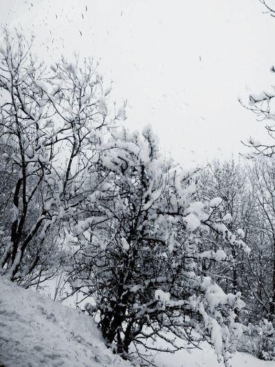 Neige❄ Arbres Nature Black And White Snow Montagne Alps