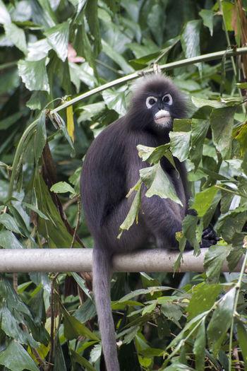 Primate Animal