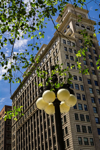 Low angle view of flower tree in city against sky
