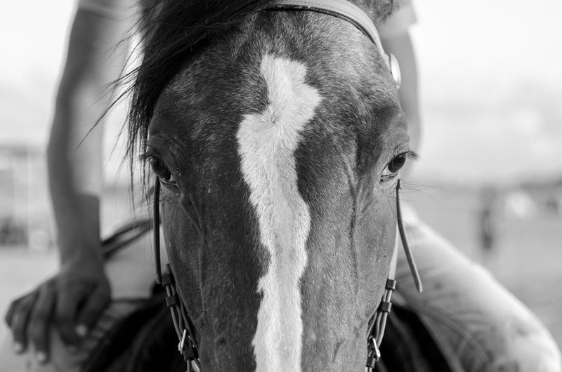 Monochrome Photography Focus On Foreground Close-up Headshot One Animal Mammal Domestic Animals Herbivorous Day Livestock Human Hair Animal Nose Young Adult Zoology Horse Horse Riding Hand